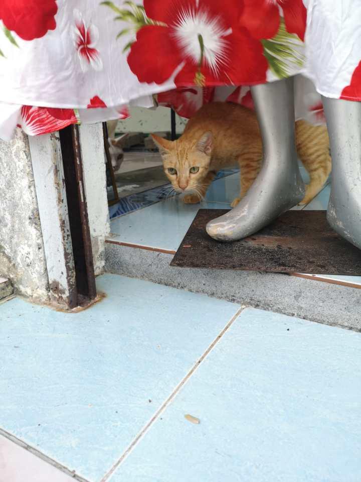 Thaimaassa on kissoja. Kaikkialla.