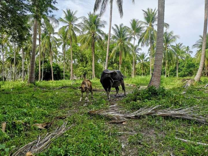 Thaimaan koronavirustilanne; Kesäkuu