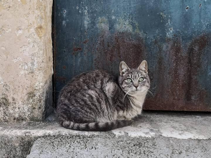 Marjan-kukkulan metsistä löytyy paljonkin kissoja pyörimästä ja ovat varsin seurallisia! Eivätkä liity jouluun mitenkään.